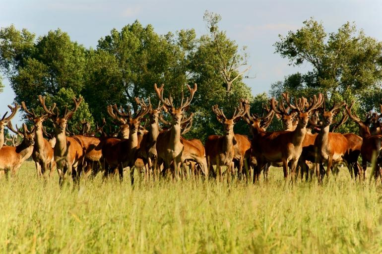 Пермский опыт разведения оленей высоко оценили в Минсельхозе